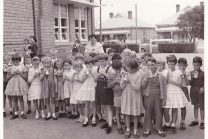 Children at the Ethelton Primary School drinking milk made available free by the school milk programme in the early 60s.