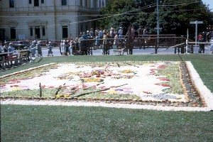 Photo courtesy of Elaine Hall. One of the large floral displays on Adelaide's Flower Day in  the 60s